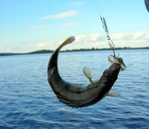 Купить рыболовные снасти - идея для своего дела