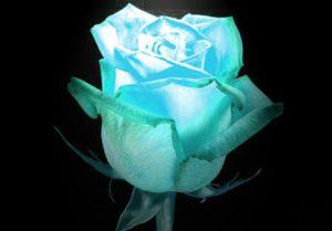 Как сделать живые светящиеся цветы дорогой подарок на 50 летие женщине