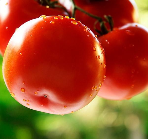 Выращивание помидоров в открытом грунте на даче