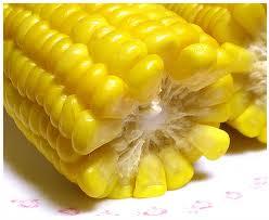 Технология выращивания кукурузы на зерно в селе