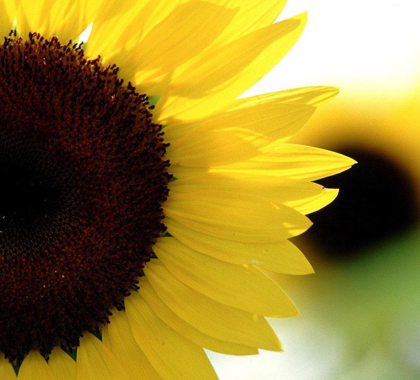 Сезонная и круглогодичная продажа семян цветов.