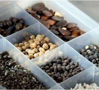 Прибыль от продажи семян