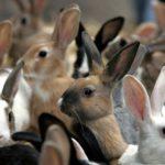 Разведение кроликов — окупаемость 1-2 года