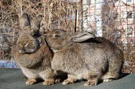 Прибыль от выращивания кроликов