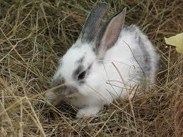 Выращивание кроликов - рентабельный бизнес