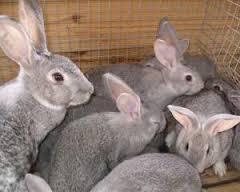 Выращивание кроликов - своя мини ферма