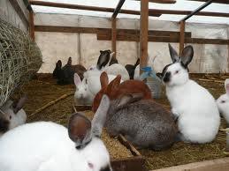 Выращивание кроликов - с чего начать?