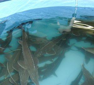 Способы разведения рыбы дома