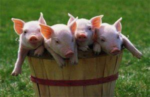Фермерское хозяйство - растениеводствоили животноводство?