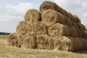Крестьянское фермерское хозяйство - его виды и преимущества