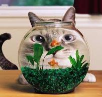 Изготовление аквариумов — как построить бизнес!