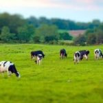 Как начать заниматься фермерским хозяйством