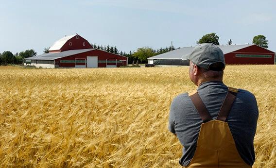 Резюме бизнес плана для фермерского хозяйства