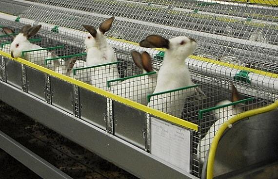 оборудование кроликофермы