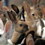 Как открыть кроликоферму и начать зарабатывать