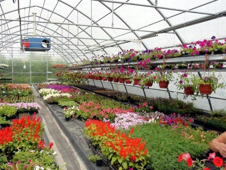 Предприятие по выращиванию цветов 36
