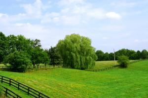 Один из вариантов Вашего бизнеса - выкуп земельного участка в собственность