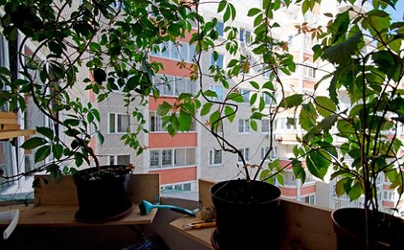 vyrashhivanie-na-balkone