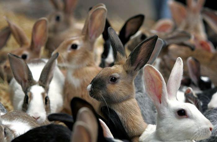 Идеи для бизнеса кроликов производства натяжных потолков бизнес план