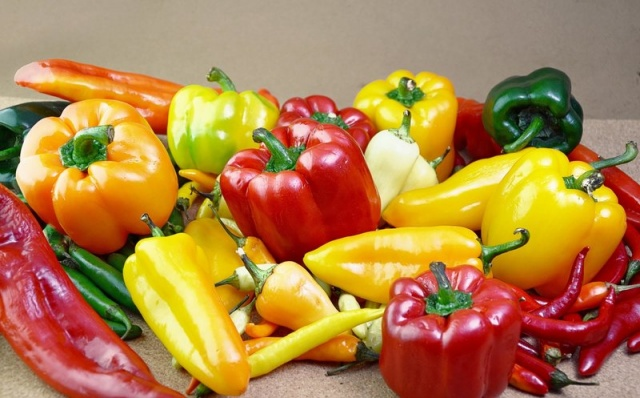 Можно ли выращивать болгарский перец круглый год