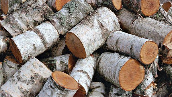 Бизнес план производство дров стартапы и бизнес идеи