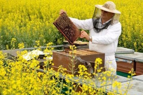 Изображение - 6 идей сельскохозяйственного бизнеса с нуля imker-DW-Wirtschaft-Krottorf