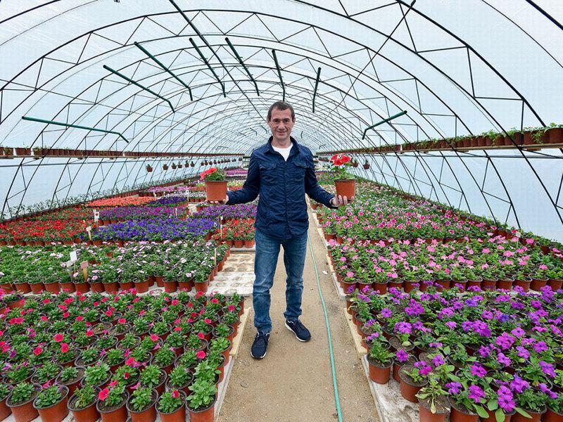 Изображение - Выращивание цветов в теплице как бизнес 13