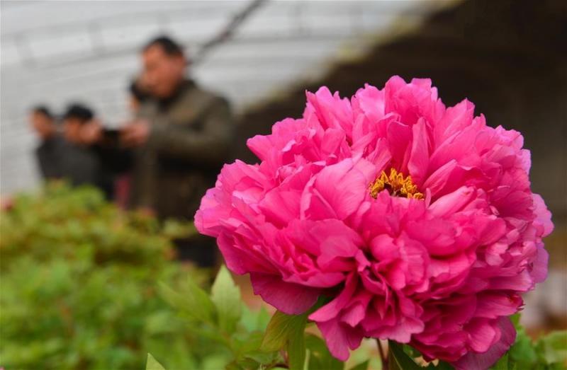 Какие цветы можно выращивать в теплице