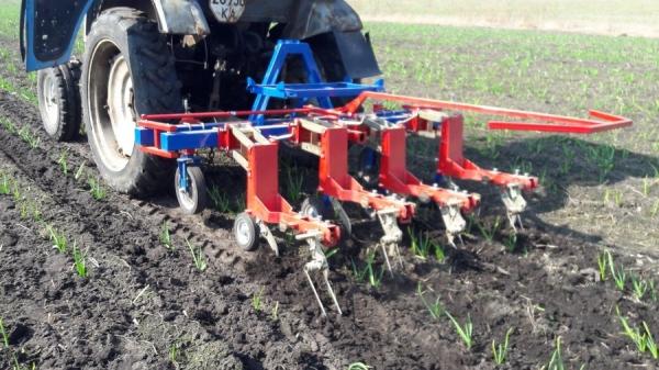 Изображение - Выращивание чеснока как бизнес 3-3