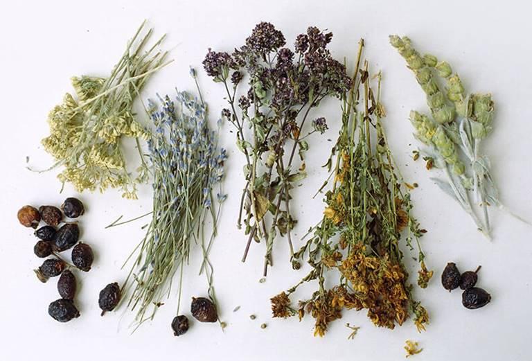 Выращиваем лекарственные растения на своем участке