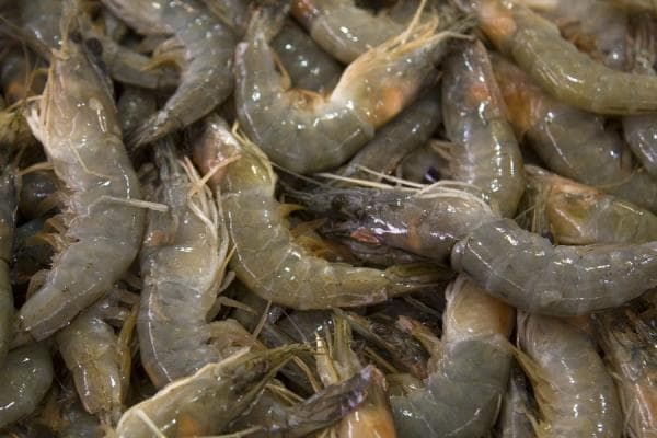 Изображение - Выращивание и разведение креветок в домашних условиях как бизнес kuwait-fish-suq07-min