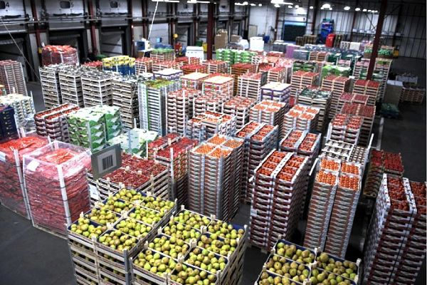 Бизнес план на овощехранилище бизнес план ивановской области
