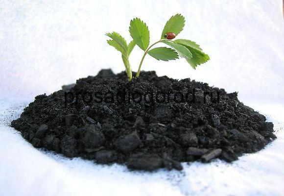 Изображение - Производство древесного угля как бизнес 3-min-3